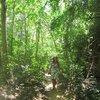 Разве это джунгли. Если переползти через скалу, на Ре Лей, то там пальмовый лес, очень красиво, вот это для меня были джунгли. Хотя по фильмам, это фото ближе.