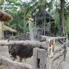 потрясающий зоопарк!
