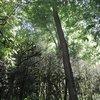 погибшие в 2014 г. самшитовые леса (Мезмай)