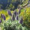 Гірські квіти