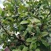 На території отелю ростуть лимони, лайми, фікуси, кактуси та багато іншої целені.