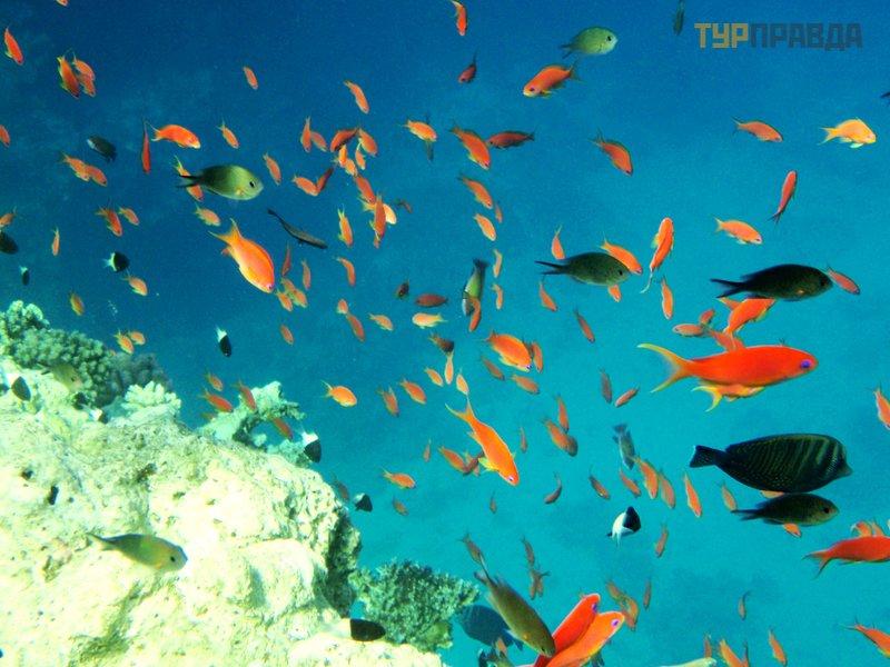 Рифы Макади Бей